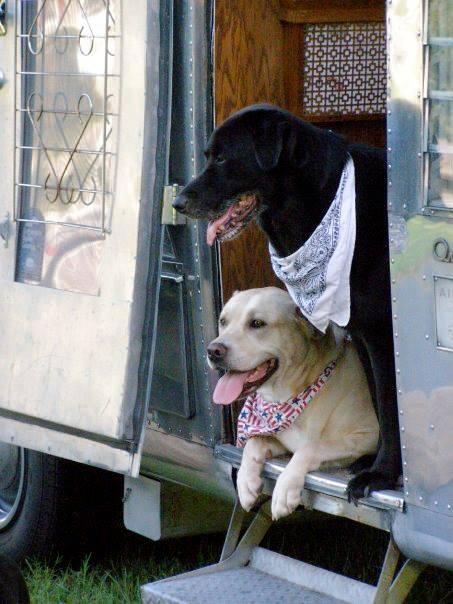 dogs in door