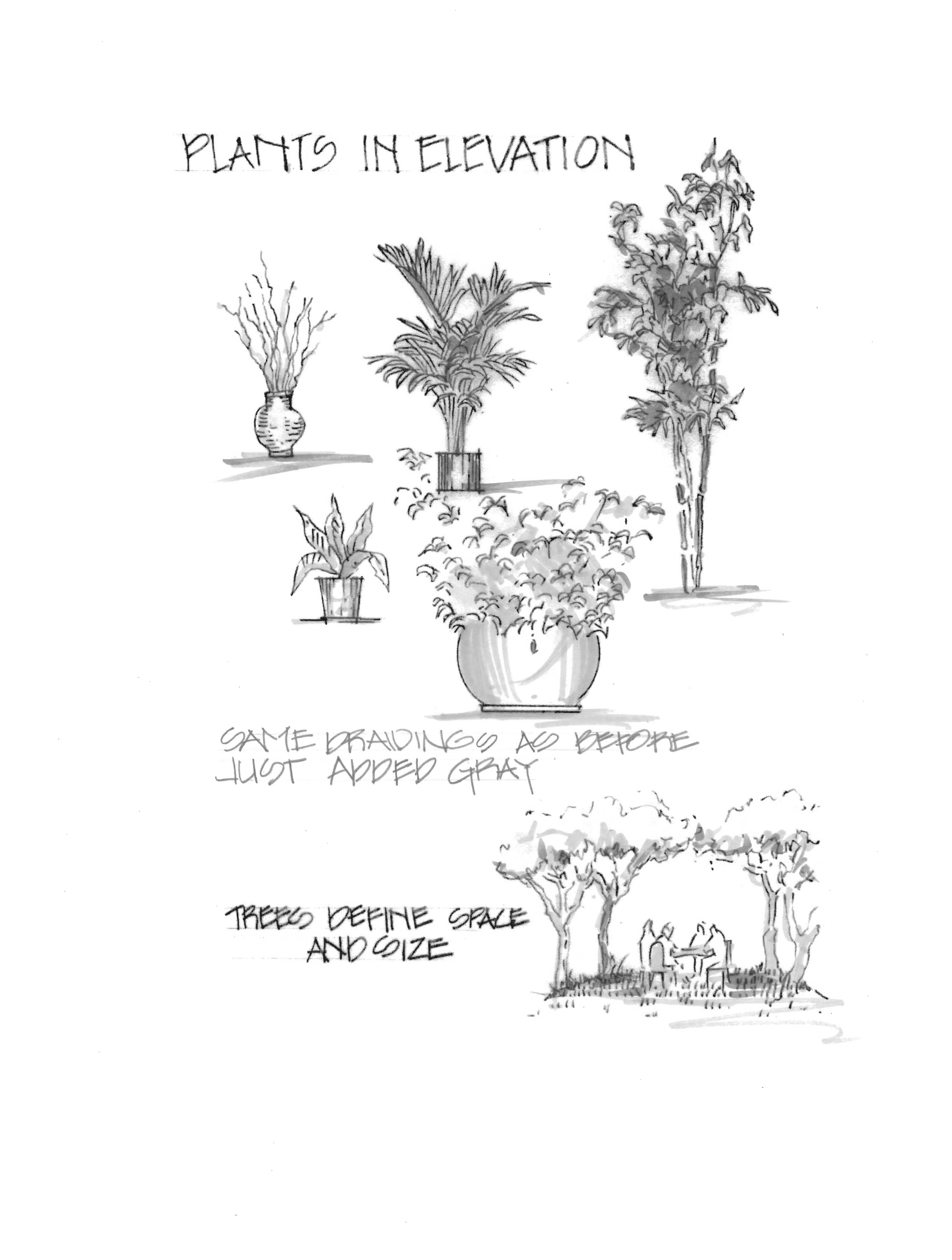 Elevation And Plan Of Trees : Plants in elevation grandmas keeping busy