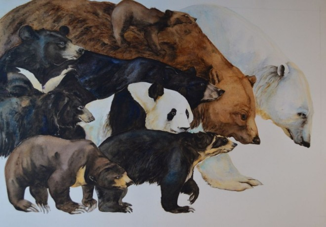 bears81-1024x716